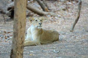 2nd cub